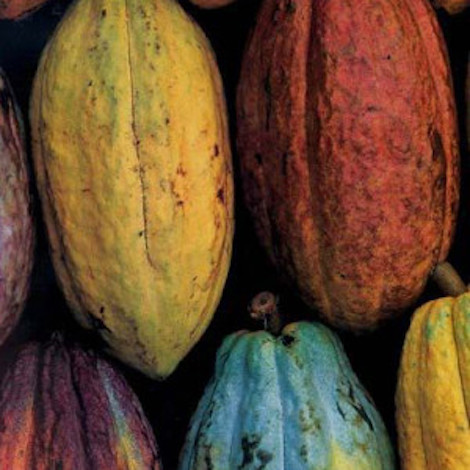 Cacao Beans - Image from Wild Food Cafe.com